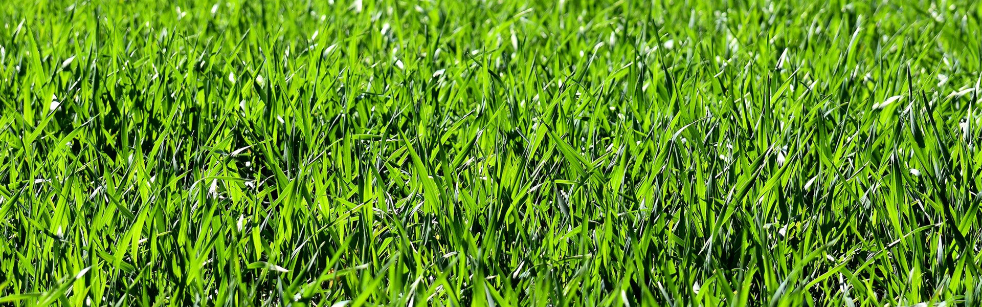 How To Mow The Lawn In Summer All The Tricks Oleomac