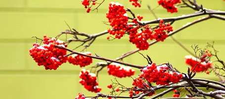 How to prune decorative branches