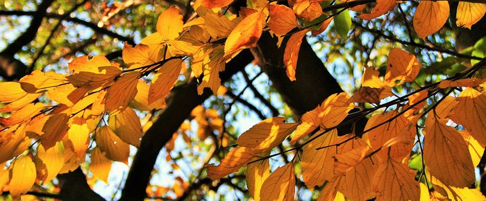 Autumn gardens: how to keep them at their best