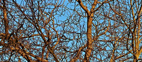 Pruning in winter: The Best Times to Do it