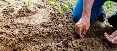 How to till soil