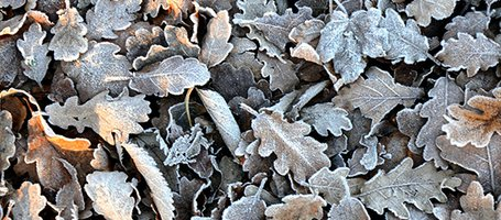 Garden in Winter: All the Essential Maintenance Jobs