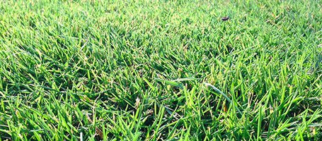 Lawn aeration: why, how and when to do it