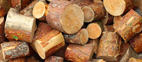 When to Cut Firewood for Winter